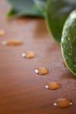 Machen Sie Blätter naß lizenzfreie stockfotos