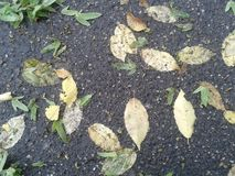 Machen Sie Blätter naß Lizenzfreies Stockbild
