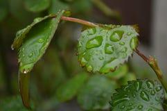Machen Sie Blätter naß Lizenzfreies Stockfoto