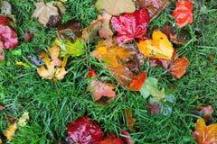 Machen Sie Blätter sich gelb färben, das Rot nass, das auf dem grünen Gras orange ist Lizenzfreie Stockfotos