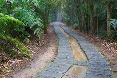 Machen Sie die Spur nass, die tief in den Dschungel führt Stockfotos