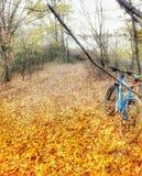 Machen Sie einen Spaziergang in der Wald- und des Geruchswilden Luft lizenzfreies stockfoto