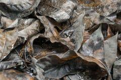 Machen Sie gefallene Blätter nass stockfotos