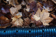 Machen Sie gefallene Blätter nass Lizenzfreie Stockbilder