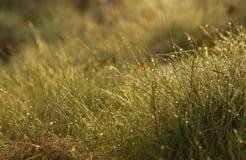 Machen Sie Gras naß stockfoto