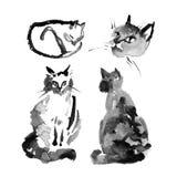 Machen Sie nass, um Aquarelltintenillustration der flaumigen sibirischen Katze auf weißem Hintergrund nasszumachen Sammlung der n Lizenzfreies Stockbild