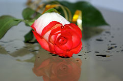 Machen Sie Rosafarbenes naß Stockfotos