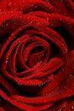 Machen Sie Rosafarbenes naß Stockbilder