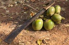 Machete and palm fruits