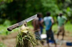 Machete i Vanuatu Royaltyfri Fotografi