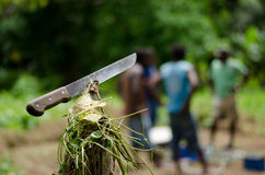 Machete in Vanuatu Royalty Free Stock Photography