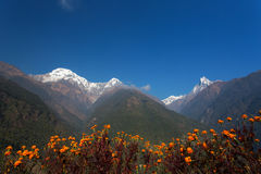 Machhapuchchhre mountain - Fish Tail in English is a mountain in royalty free stock image