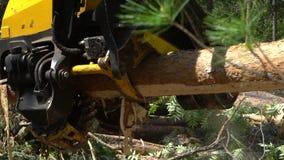 Machinalna ręka ciie świeżo siekającego drzewnego bagażnika w lesie zdjęcie wideo