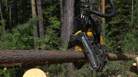 Machinalna ręka ciie świeżo siekającego drzewnego bagażnika w lesie zbiory