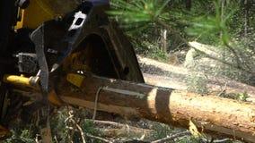 Machinalna ręka ciie świeżo siekającego drzewnego bagażnika w lesie zbiory wideo