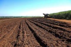 Machinalny zbiera trzciny cukrowa pole przy zmierzchem w Sao Paulo Brazylia - ciągnik na drodze gruntowej między zbierającą trzci obrazy stock