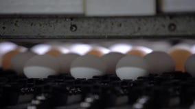 Machine die verse eieren sorteren Sluit omhoog Langzame Motie stock footage