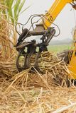 Machine harvest sugarcane. Stock Photo