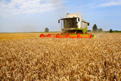 Machine harvesting. The corn field Royalty Free Stock Photography
