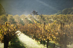 Machine harvests wine grapes Stock Photo