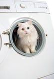 Machine à laver et chat Photographie stock libre de droits