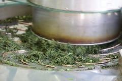 Machine pour les feuilles de thé de roulement Photographie stock libre de droits