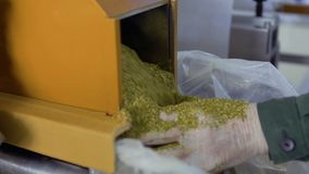 Machine put dried herbal tea into a bag. The worker holds the bag with hands and controls the process. Prores codec. Close-up stock video footage