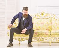 Macho attractive and elegant on serious, thoughtful face sitting on old fashioned luxury sofa. Fashion and style concept. Man with beard and mustache wearing royalty free stock image