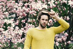 Macho brushing hair in park with blossoming trees. Man with beard in yellow sweater on floral background. Spring season concept. Flourishing and growth. New stock photos