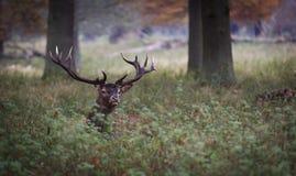 Macho en bosque Imagenes de archivo