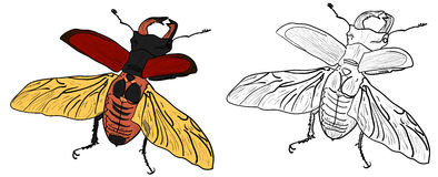 Macho-escarabajo Foto de archivo