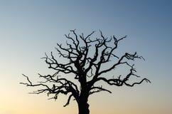 Machtig oud boomsilhouet stock fotografie