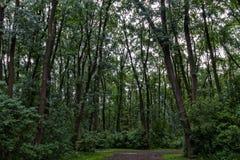 Machtige bomen Royalty-vrije Stock Afbeelding