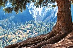 Machtige wortel en boomstam van magische reuze oude boom stock afbeelding