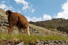 Machu Piccchu - a summer retreat of Inca elites 06 stock photography
