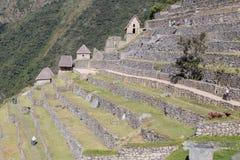 Machu Picchu, águas Calientes/Peru - cerca do junho de 2015: Terraços na cidade perdida sagrado de Machu Picchu dos Incas no Peru fotos de stock