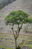 Machu Picchu в Перу стоковая фотография rf