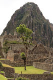 Machu Picchu Photo libre de droits