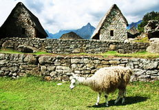 Machu-Picchu Royalty Free Stock Images