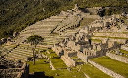 Machu Picchu Fotografia de Stock