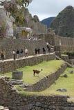 Machu Picchu houses stock image