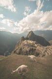 Machu Picchu iluminado por la luz del sol pasada que sale de la abertura se nubla Visión granangular desde arriba con el llam de  Fotografía de archivo