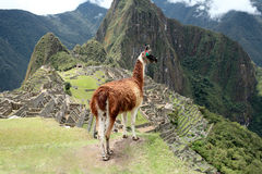 Machu Picchu Inca city, Peru. Royalty Free Stock Images