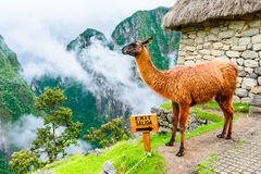 Machu Picchu, Incas ruins in Andes at Cuzco, Peru Stock Images