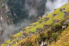 Machu Picchu, Incnca-ruïnes in de Peruviaanse Andes stock foto's
