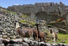 Machu Picchu, Incnca-ruïnes in de Peruviaanse Andes royalty-vrije stock foto's