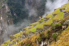 Machu Picchu, Incnca ruins in the Peruvian Andes stock photos