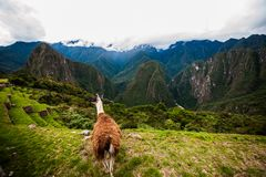 Machu Picchu royalty free stock photos