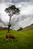 Machu Picchu Royalty Free Stock Photography