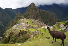 Machu Picchu nel Perù Fotografia Stock